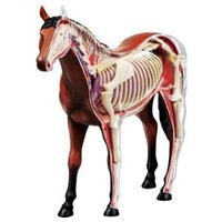 3D Horse Anatomy Model Puzzle