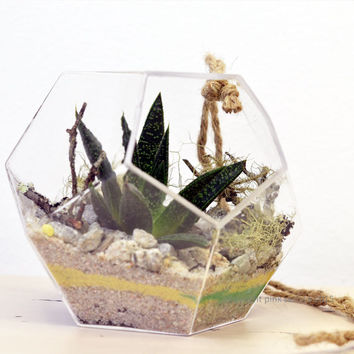 Geometric Succulent Terrarium// Small Hanging Dodecahedron// Living Home Decor// Green Gift