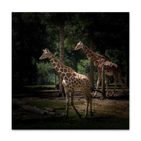 Giraffe Art - Zoo Animals - Giraffe Wall Art - Nature Photography - Animal Print - Bedroom Decor - Animal Lover Gift - Giraffe Decor