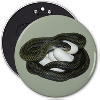 Japanese Rat Snake, beautifull and caring mother! 6 Inch Round Button