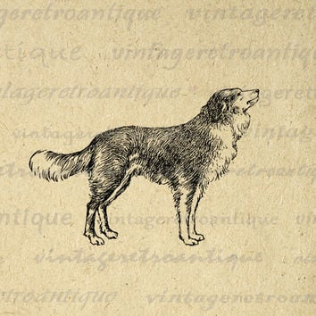 Antique Dog Digital Printable Image Download Graphic for Transfers Pillows Tea Towels etc HQ 300dpi No.279