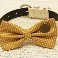 Mustard dog Bow attached to collar, Pet accessory, Charm, Never Never Give up