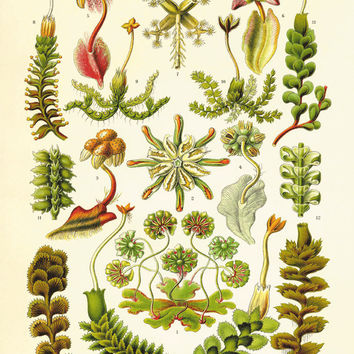 Sea Plants sea life print Ocean life old prints Nautical art print Ocean Decor Natural History sea life art Poster art nature print 11x14