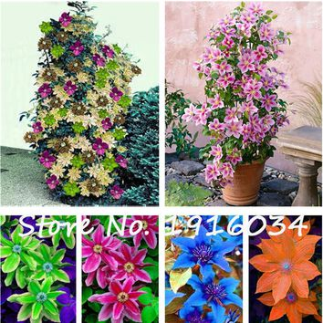 Hot Sale 100Pcs Clematis Seeds Flower Clematis Vines Bonsai Flower Seeds,Indoor / Outdoor Pot Seed for Home Garden Decor