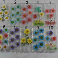 Unique Real Flower Four Leaf Clover Daisy - iPhone 4/4s Case iPhone 5/5s/5c Case Dried Pressed Flower Hard Resin Cover
