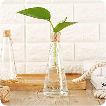 Glass Flower Vase Terrarium Succulents Plant Gift Micro Landscape Cover and Filler Terrarium Home Decoration Vases