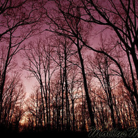 Wine Purple Forest Night Sky photograph  fine art photograph Purple