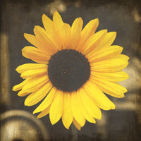 Yellow Sunflower, Digital Art Print, Flower Picture, Home Decor Ready to Frame Photo, Wall Hanging, Fall Rustic Brown Nebraska Nature Floral