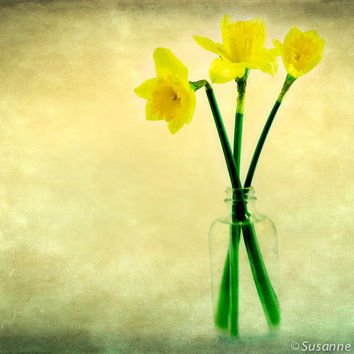 Flower Photography, Daffodil Still Life, Yellow Spring Flowers, Vintage Style, Shabby Chic, Home Decor, Easter, Gifts for Mom