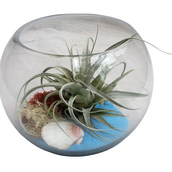 Blue Airplant Terrarium Bowl