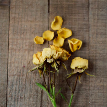 Rustic wall art, cottage decor, yellow, roses, dried rose, flower art, nursery decor, brown, fine art photo, 8x10, romantic art, farmhouse