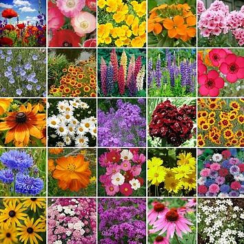 Wildflower Northeast Mix Seeds (7g+Seeds)