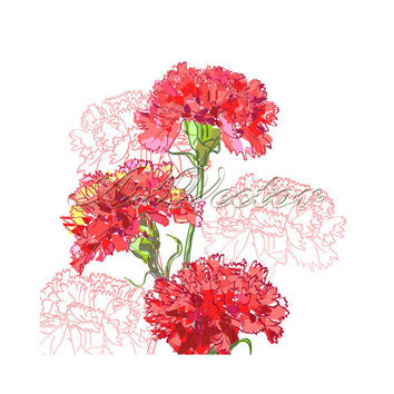 Vector flowers (EPS,JPG) ,digital clip art, birthday card, wedding cards, invitation cards, greeting cards,carnation,pink.