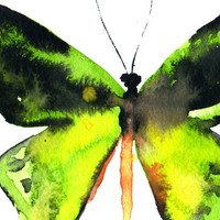 Butterfly Original Watercolor Painting 8 x 10