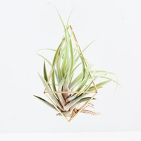 Diamond Brass Air Plant Holder