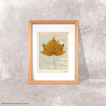 Maple leaf print-Fall decor-Thanksgiving print-rustic print-maple leaf dictionary-botanical print-leaf book art-home decor-NATURAPICTA-DP112