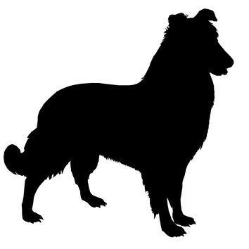 Collie Dog Decal - D1018