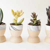 Mini Planters set of 4, Modern Decor, Father's Day, Black and White