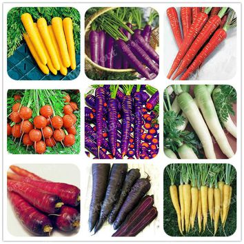 300 PCS Bonsai Rainbow Carrot seeds Rare Chinese Vegetable Seeds-Healthy Organic Sugar Carrot seeds Plant For Home Garden