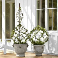 LIVE IVY SPIRAL TOPIARY