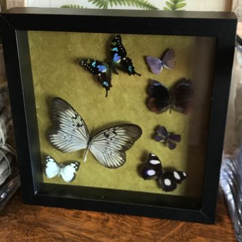 Rice Paper Butterfly Collection