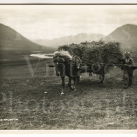 Nr. Akureyri Icelandic Boy with Horse & Hay Cart Vintage Photo - Iceland c1930s