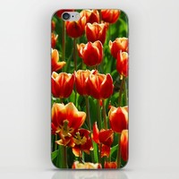 Red Tulips iPhone & iPod Skin by Claude Gariepy