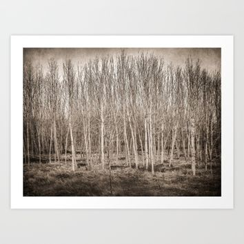 """Young trees...."" Art Print by Guido Montañés"