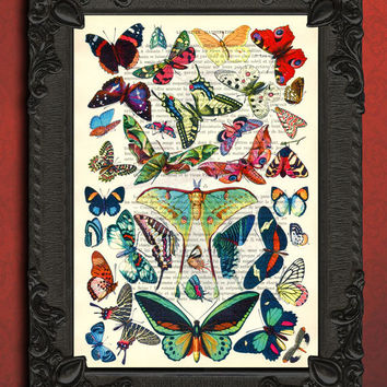 Collection of butterflies butterfly french dictionary page upcycled book dictionary print butterfly specimen wall art