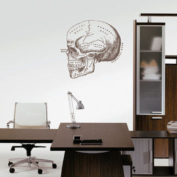 kik2446 Wall Decal Sticker skull bone structure title doctor's office Clinic
