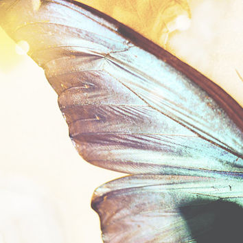 Animal Photography - Dreamy Blue Butterfly Wing, 8x10 5x7 wall decor, nursery wall art, natural history print blue yellow