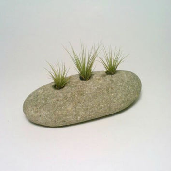 Air Plant Holder, Engraved Rock, Stone Paperweight,  Natural Tillandsia Holder, Eco Friendly