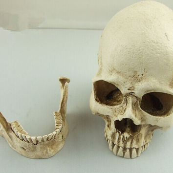 Teaching Model High Simulated Human Skull  Medical Realistic Research Resins Chin Separable 9x7x8cm Tricky props