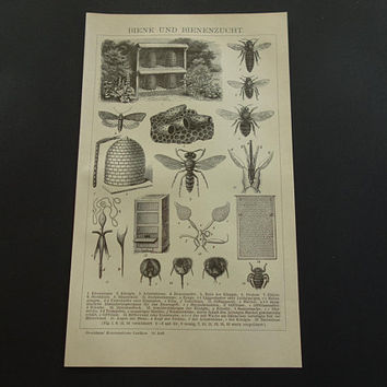 """BEEKEEPING old print 1911 original vintage pictures of bees bee hive beehive antique prints 15x24c 6x10"""" small illustration"""