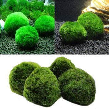 Aquarium Plants Seeds Fish Tank Aquatic Water Moss Balls Landscape Decor