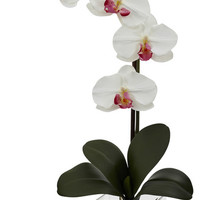 Giant Phalaenopsis Orchid w/Vase Arrangement - Asian - Artificial Flowers - by Nearly Natural