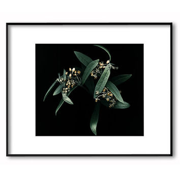 Botanical wall decor.Dark photography.Leaves photography.Scanography art.Sizes from 5x7 to 30x40.