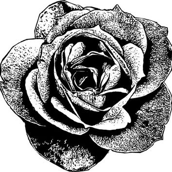 Digital rose flower png clip art Image Download graphics illustration roses plants printables for cards t shirts totes