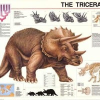 The Triceratops Dinosaur Education Poster 27x39