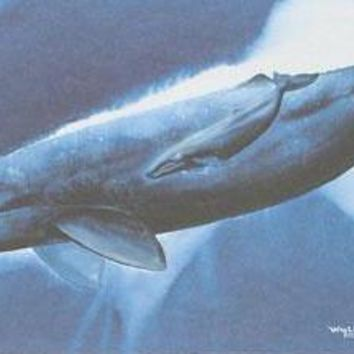 Gray Whale Waters - Limited Edition Lithograph on Paper by Wyland