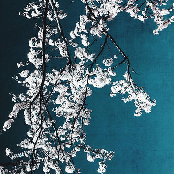 flower photography, white flower print, white flowers, cherry blossom, nature photograph, floral print, blue sky, fine art print, home decor