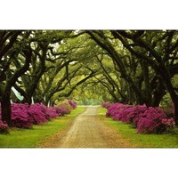 (24x36) Sam Abell Beautiful Pathway Lined with Trees and Purple Azaleas Photo Poster