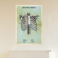 The Human Thorax Adhesive Print