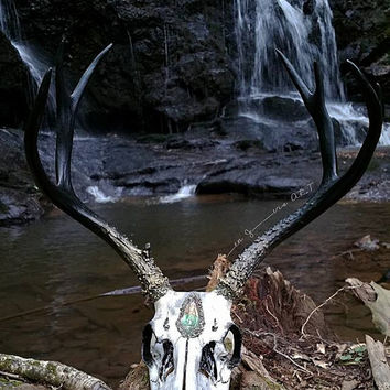 Deer Skull - Buck Skull - Animal Skull - Taxidermy - Real Animal Skull - Animal Bones - Oddities - Animal Skull Decor - Crystal Skull