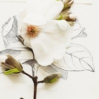 Magnolia and Flower illustration No. 6688