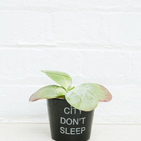 Urban Grow Small Logo Planter in Black and White - Urban Outfitters