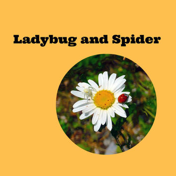 Ladybug & Spider (2): The Case of the Missing Ladybug