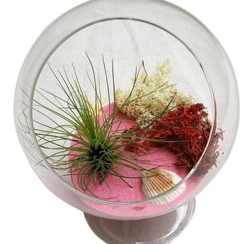 Pink Table Airplant Terrarium