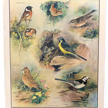 Birds Poster - Vintage Classroom Chart, Home Decor, School Poster, Wall Hanging, Macmillans Nature Chart
