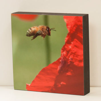 Honeybee  and Poppy Wall Panel - 8x8 Photo Standout, Ready to Hang Nature Photography, Red, Green Home Decor, Summer Flower